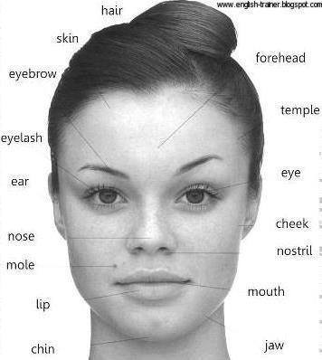 ELT: Words Describing Facial Features | BroadyELT